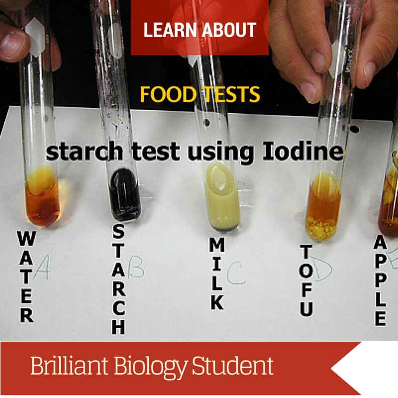 Iodine Test for Starch - Brilliant Biology Student